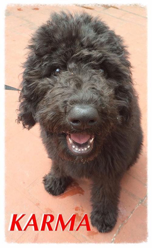 Nombres de perros hembra, www.clickperros.com