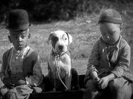 Pitbull perros en peliculas y series