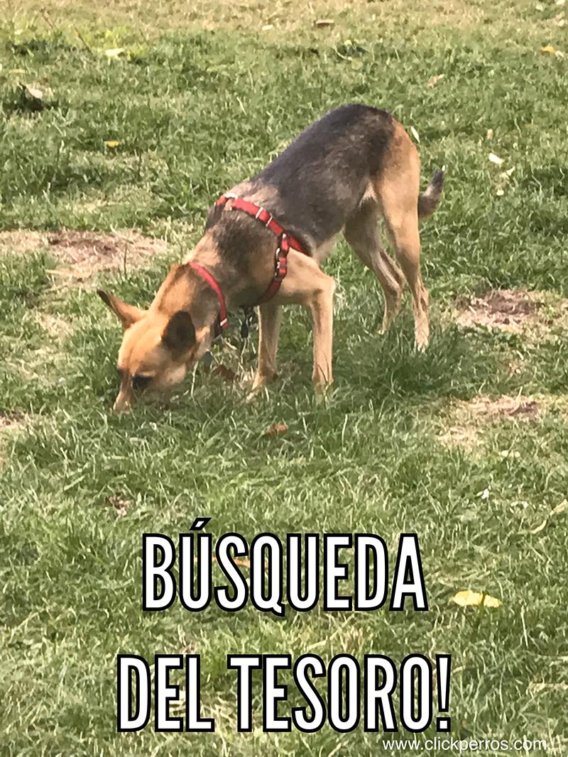 Adiestramiento canino argentina