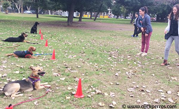 Adiestramiento canino buenos aires, escuela para perros argentina, como educar a un perro, adiestramiento de perros buenos aires