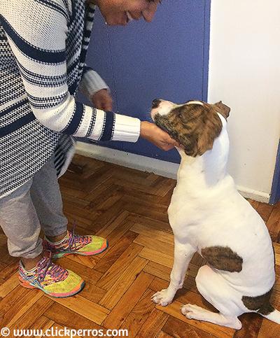 adiestramiento canino a domicilio capital federal buenos aires argentina