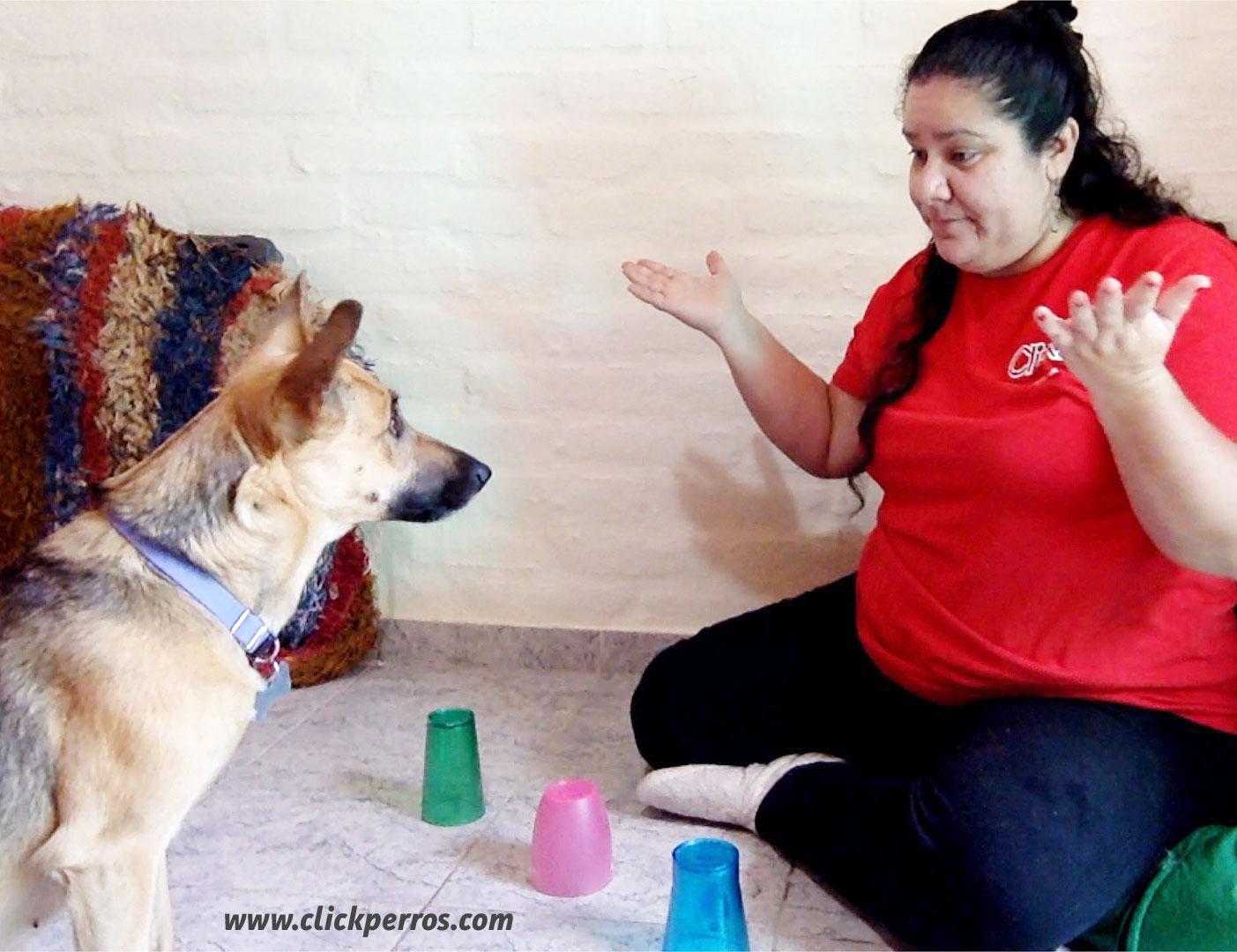 Juegos mentales para jugar con tu perro