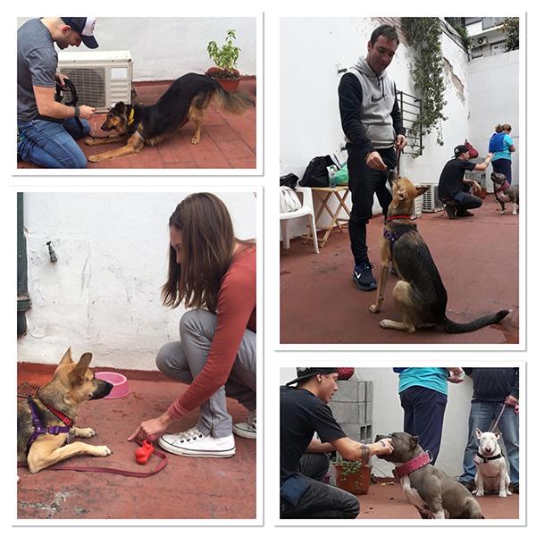 Curso de adiestrador de perros, certificacion de adiestrador canino