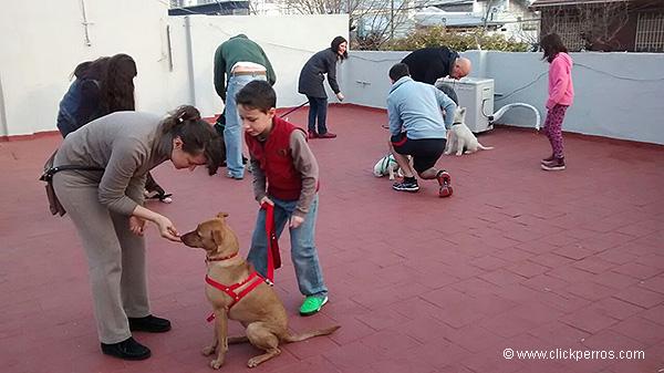 Adiestramiento canino en capital federal buenos aires argentina