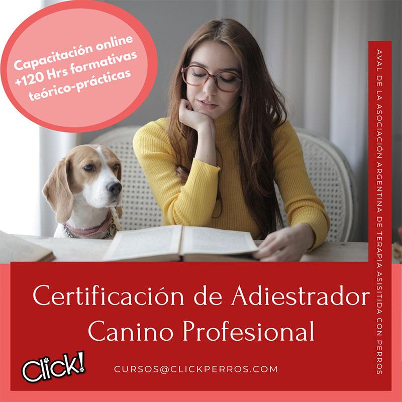 Curso de adiestrador canino profesional, que hay que estudiar para ser adiestrador canino, requisitos para ser adiestrador canino