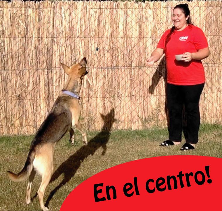 Juegos para jugar con tu perro en casa