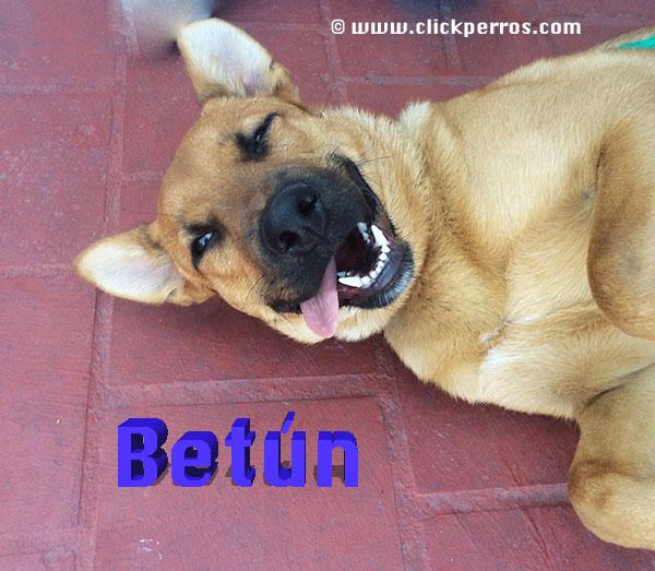 Nombres bonitos y originales para perros
