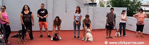 aprendiendo a adiestrar a mi perro en CABA