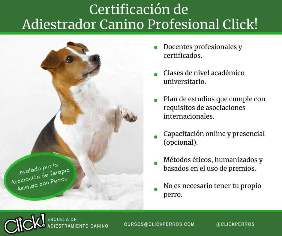 Curso de adiestrador canino profesional, que hay que estudiar para ser adiestrador canino, donde estudiar adiestramiento canino, como puedo ser adiestrador canino