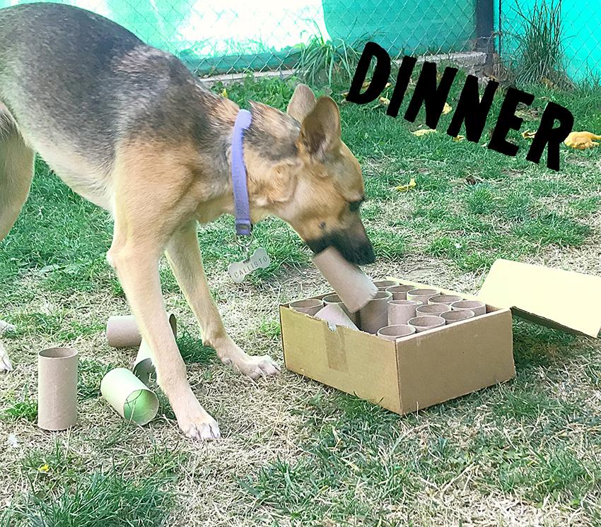 Juguetes caseros para tu perro, juguetes caseros interactivos para perros, juguetes de inteligencia para perros