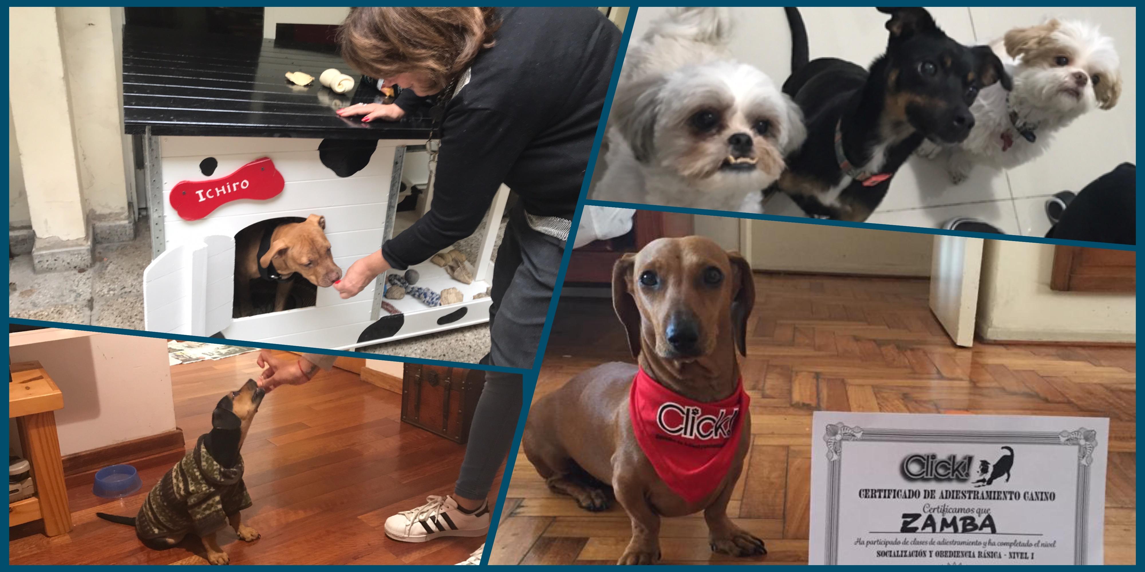 Adiestramiento Canino Mendoza, educador canino, adiestrador de perros