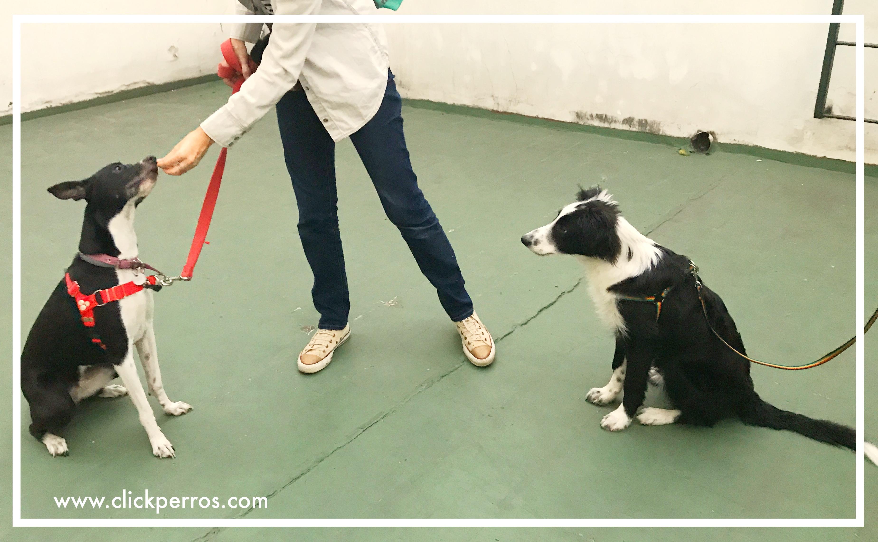 adiestramiento canino con metodos positivos mendoza argentina