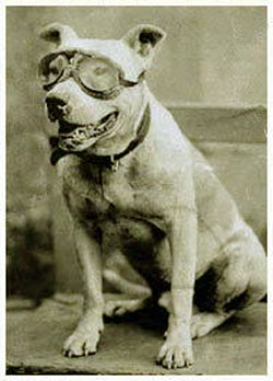 perros pitbull famosos