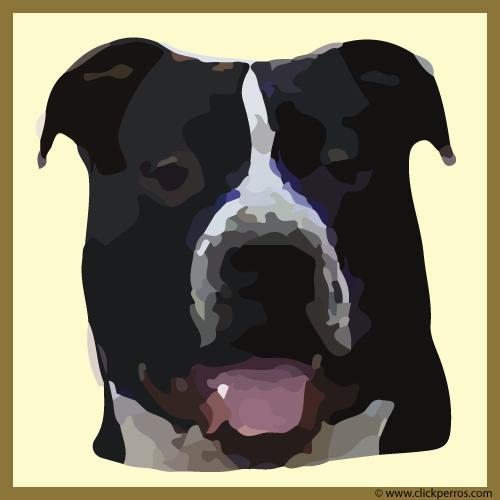 Nombre para perros pitbull
