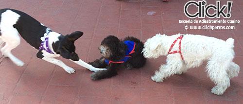Fotos de cachorros jugando