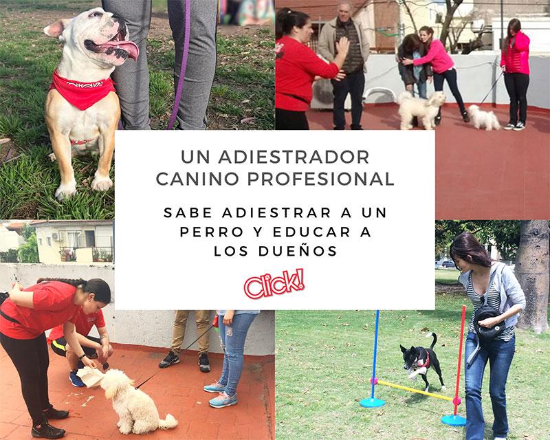 Curso de adiestrador canino profesional, certificación de adiestrador canino profesional, curso de adiestrador de perros, que estudiar para ser adiestrador canino