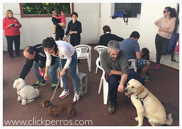 adiestramiento canino en palermo y recoleta