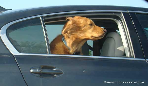 vacaciones con tu perro, viajar con perro en coche