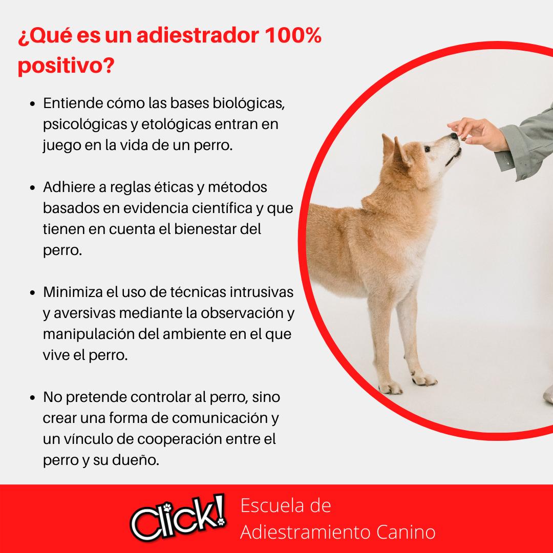 mitos sobre el adiestramiento canino, adiestramiento canino positivo, que es el adiestramiento canino positivo