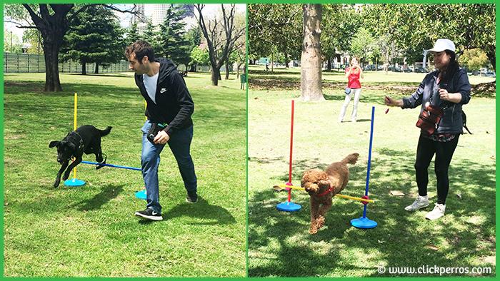 agility para perros capital federal, adiestramiento canino buenos aires, escuela para perros