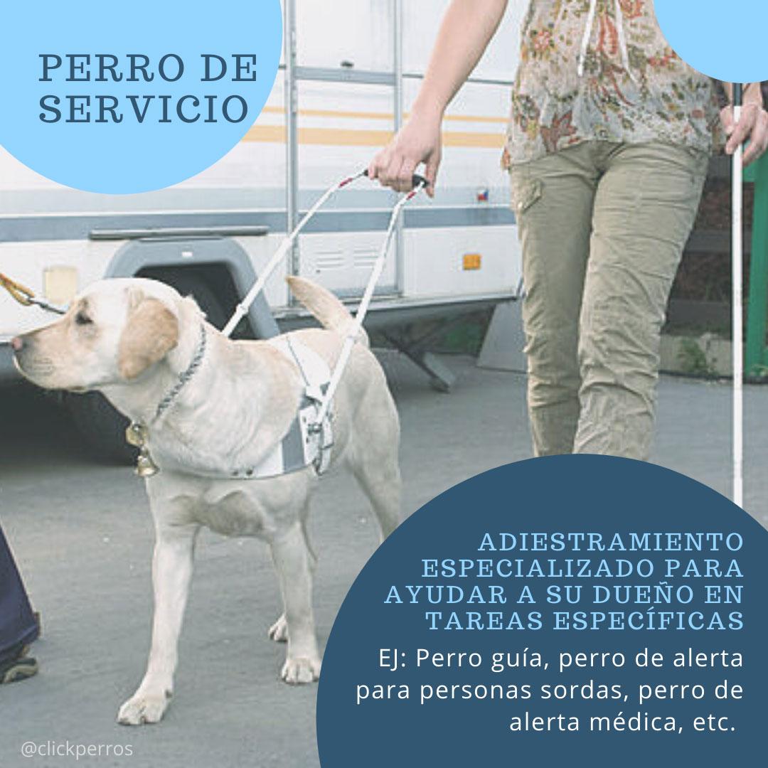 trabajar como adiestrador canino, perro de servicio