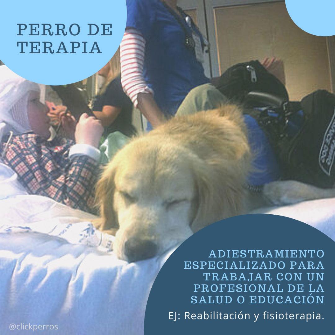 Trabajar como adiestrador canino, perro de terapia