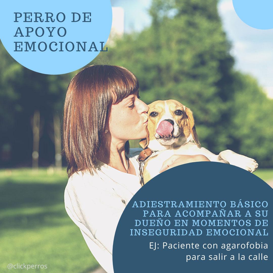 trabajar como adiestrador canino, perro de apoyo emocional