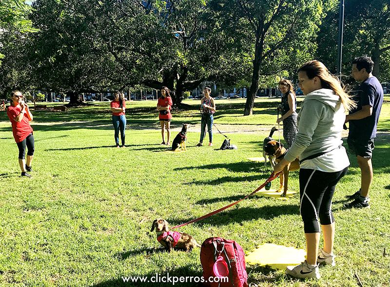 certificación de adiestrador canino profesional, curso de adiestrador canino, curso de educador canino, curso de adiestrador de perros, curso de entrenador canino