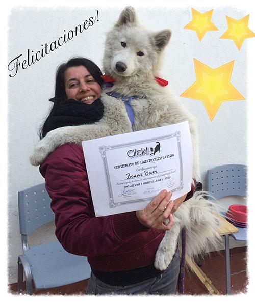 Adiestramiento canino en Recoleta Buenos Aires