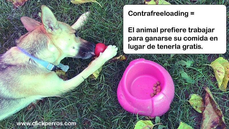 adiestramiento canino, etología canina, contrafreeloading