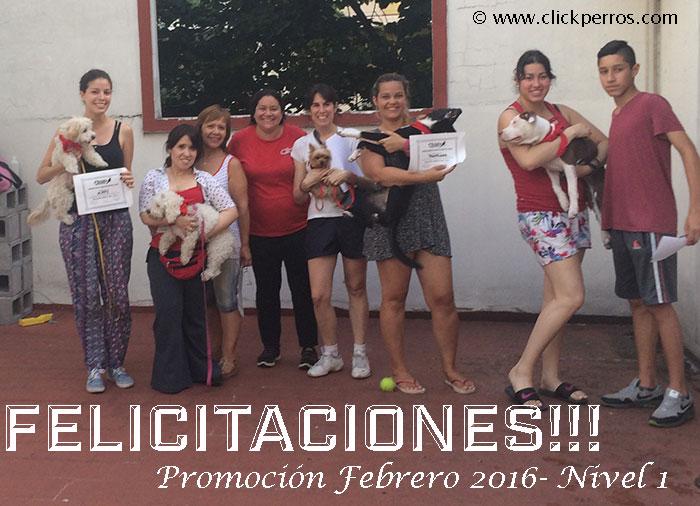 Escuela para perros en Recoleta