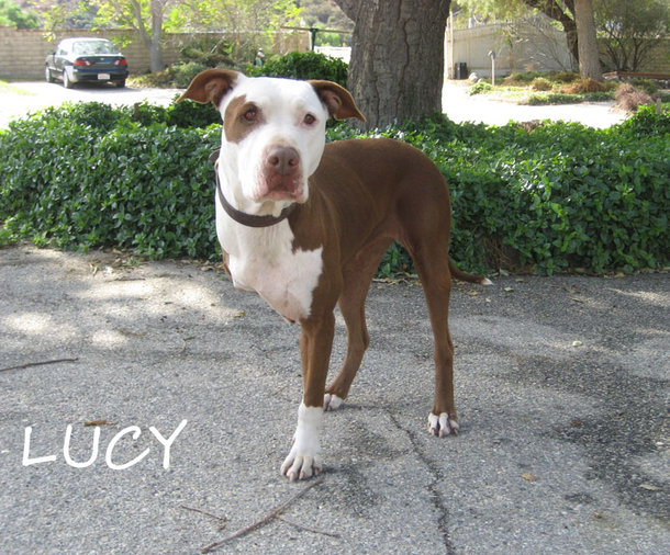 Lucy de