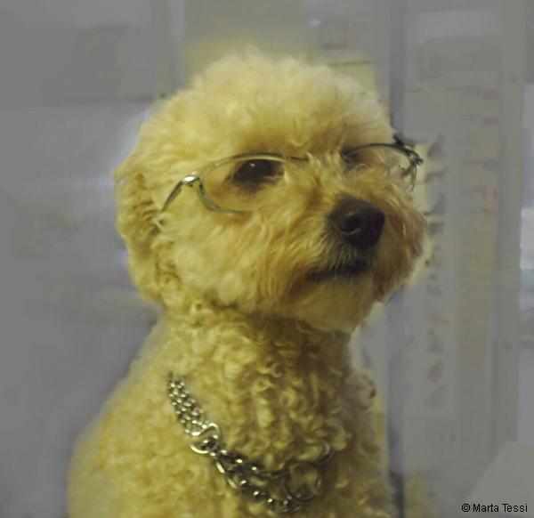 Perro con anteojos, ojos de perro