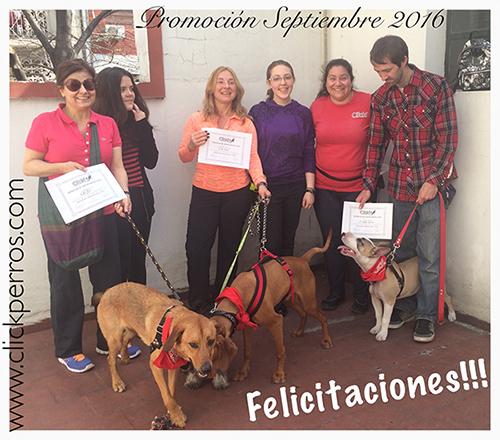 adiestramiento canino en buenos aires argentina recoleta palermo