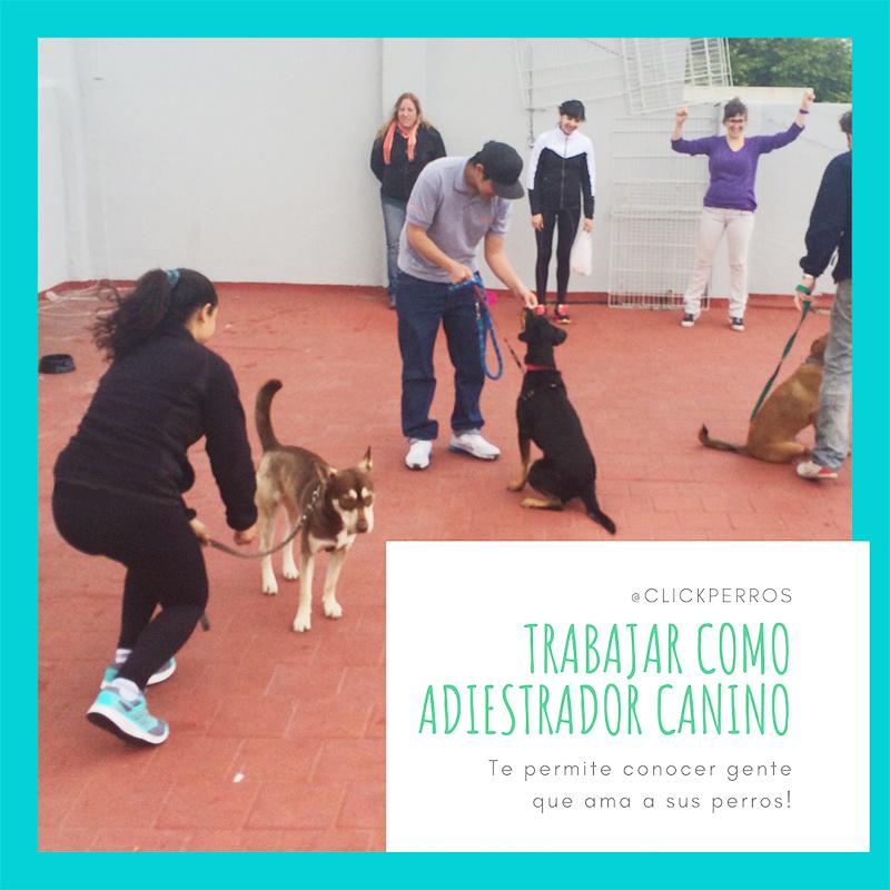 trabajar como adiestrador canino, curso de adiestrador canino