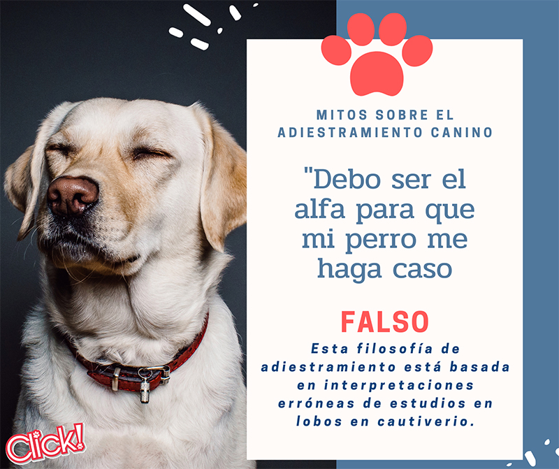 mitos sobre el adiestramiento canino, dominancia en perros, perro alfa