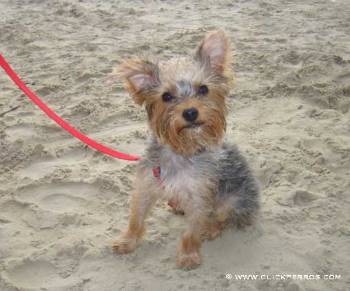 vacaciones con tu perro, viajar con perro